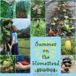 Late Summer on the Homestead ~ Wordless Wednesday