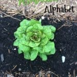 Blogging Through the Permaculture Alphabet