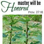 Whoever Tends a Fig Tree ~ Scripture and Snapshot