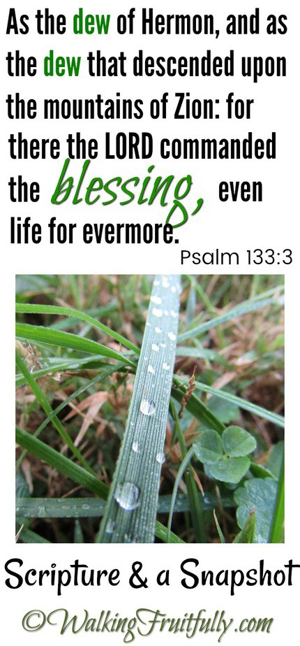 The LORD commanded the Blessing... Psalm 133:3