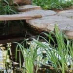 Does Your Garden Need a Pond